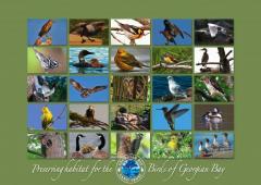 GBLT_poster_birds_small