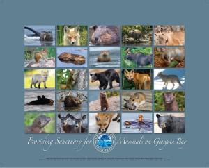 GBLT_poster_mammals