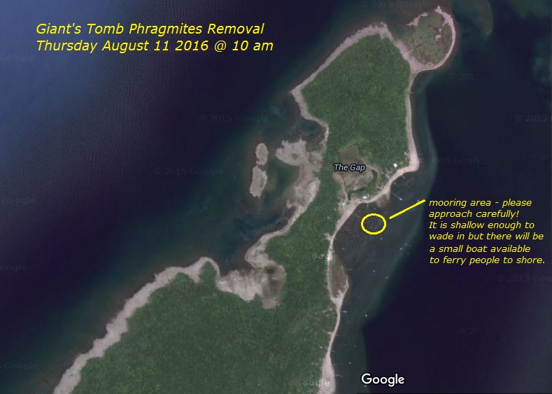 Giant's Tomb phrag removal Aug 11 map