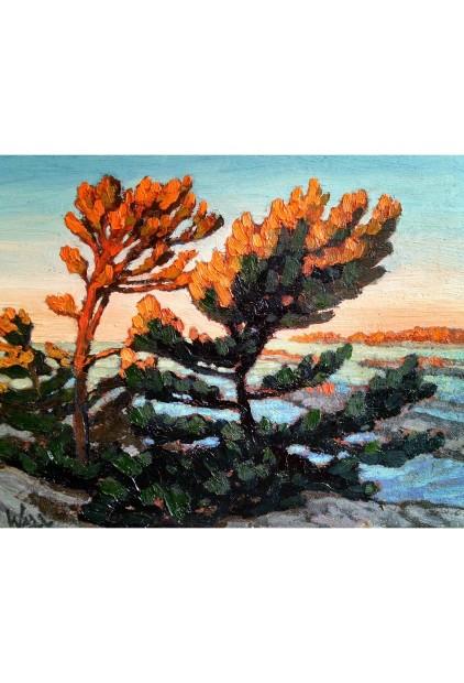 """""""White Pine at Sunrise, Byng Inlet"""" – Bryan Wall"""